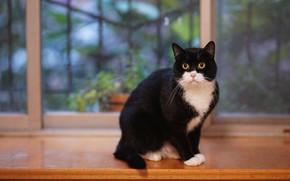 Картинка кошка, кот, взгляд, фон, черно-белый, черный, окно, подоконник, сидит