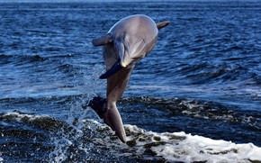 Картинка море, дельфин, прыжок