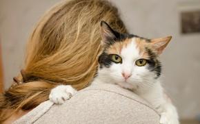 Картинка кошка, фон, волосы, боке, мордочка, девушка