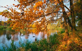 Картинка осень, листья, деревья, пруд, парк, colorful, nature, park, autumn, leaves, tree