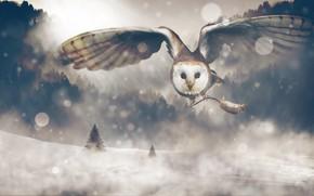 Картинка зима, лес, взгляд, снег, полет, природа, рендеринг, сова, коллаж, птица, крылья, мышь, ели, арт, когти, …