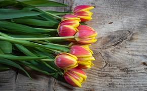 Картинка цветы, букет, весна, тюльпаны, природы