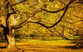 Картинка осень, листья, деревья, мост, парк, forest, nature, yellow, park, autumn, leaves, tree