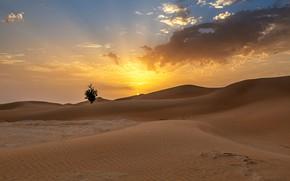 Картинка песок, солнце, облака, дерево, холмы, пустыня, дюны