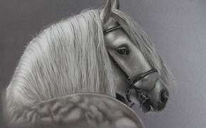 Картинка конь, лошадь, грива