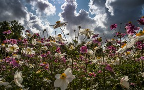 Картинка лето, небо, цветы, луг