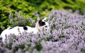 Картинка поле, кошка, кот, цветы