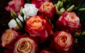 Картинка розы, букет, красные, розовые, бутоны