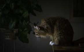 Картинка кошка, дом, стол