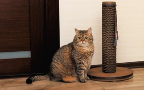 Картинка кошка, кот, взгляд, морда, поза, серый, фон, комната, стена, игрушка, дверь, сидит, полосатый, котяра, зеленые …