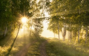 Картинка солнце, лучи, деревья, тропа