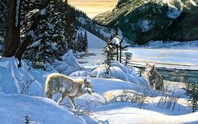 Картинка зима, лес, свет, снег, горы, ветки, природа, поза, река, скалы, берег, рисунок, волк, картина, ели, ...