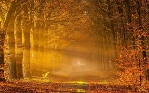 Картинка autumn, fog, leaf