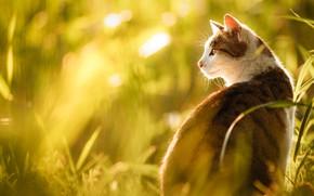 Картинка кошка, трава, кот, взгляд, морда, свет, природа, портрет, профиль, сидит, боке, серая с белым