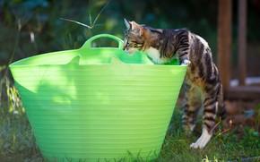 Картинка кошка, поза, котенок, корзина, игра, сад, таз