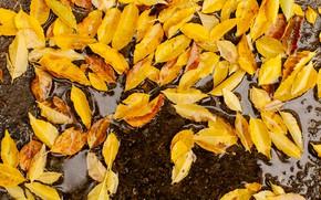 Картинка осень, листья, желтые, colorful, yellow, autumn, leaves, осенние