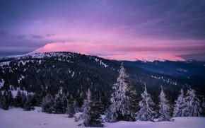 Картинка зима, облака, снег, пейзаж, горы, природа, леса, Карпаты, Дмитрий Иванов