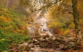 Картинка осень, природа, водопад