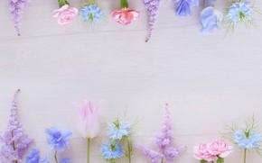 Картинка зелень, цветы, фон, розовый, голубой