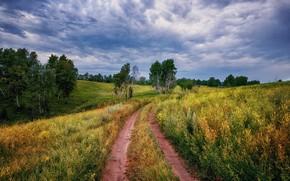 Картинка поле, лето, небо, деревья