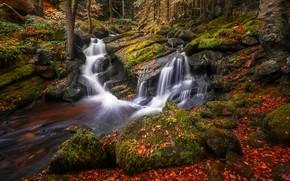 Картинка осень, лес, листья, деревья, камни, берег, листва, яркие, водопад, мох, поток, зеленые, каскад, водоем, валуны, …