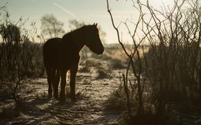 Картинка осень, небо, свет, ветки, природа, конь, лошадь, силуэт, пони, кусты