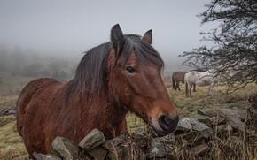 Картинка природа, туман, камни, лошади, луг