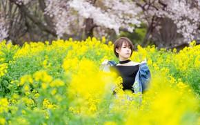 Картинка поле, девушка, цветы, поляна, весна, желтые, сад, азиатка, цветение, рапс, короткая стрижка, джинсовая куртка, рапсовое …
