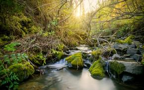 Картинка деревья, пейзаж, природа, ручей, Вода, солнечные лучи, Красивый