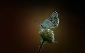 Картинка макро, бабочка, butterfly