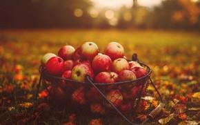 Картинка осень, трава, листья, корзина, яблоки, еда