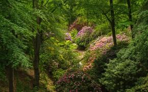 Картинка зелень, деревья, мост, пруд, парк, Швеция, кусты, рододендроны, Sofiero