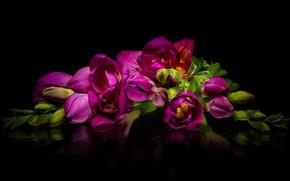 Картинка отражение, лиловый, фрезия