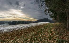 Картинка зима, поле, лес