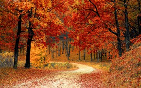 Картинка осень, лес, листья, деревья, парк, forest, landscape, park, autumn, leaves, tree, fall