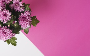 Картинка фон, букет, flower, bouquet, chrysanthemum