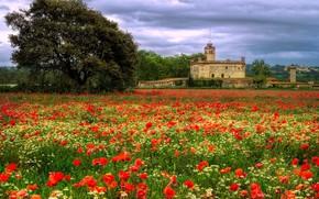 Картинка поле, лето, облака, цветы, замок, дерево, здание, вид, маки, луг, красные, архитектура, красивый, пляна, маковое …