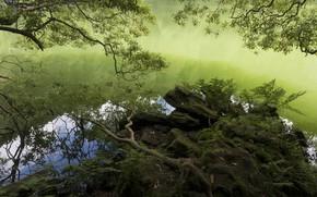 Картинка вода, ветки, озеро, берег