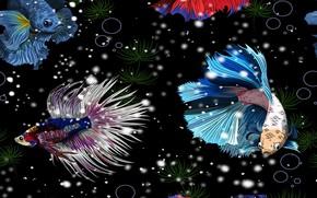 Картинка fishes, illustration, aquarium