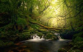 Картинка зелень, лес, лето, свет, камни, заросли, водопад