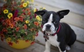 Картинка цветы, собака, щенок