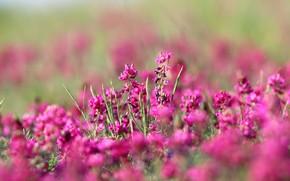 Картинка цветы, цвет, степь, фон