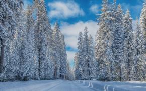 Картинка зима, дорога, лес, небо, снег, мороз