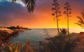 Картинка море, листья, пейзаж, закат, ветки, природа, пальмы, побережье, растительность