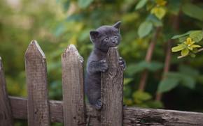 Картинка природа, животное, забор, малыш, детёныш, котёнок, Юрий Коротун