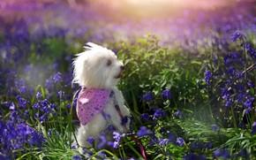 Картинка лето, цветы, природа, друг, собака