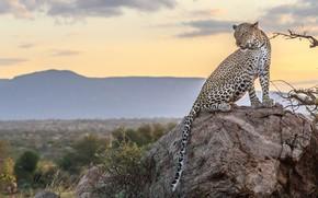 Картинка природа, камень, леопард