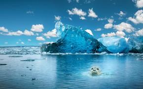 Картинка рендеринг, морда, тюлень, море, водоем, морской котик, скалы