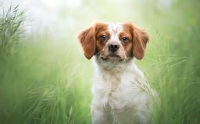 Картинка трава, взгляд, собака