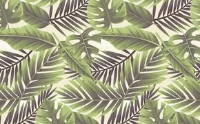 Картинка белый фон, Leaf, текстура, Floral, background
